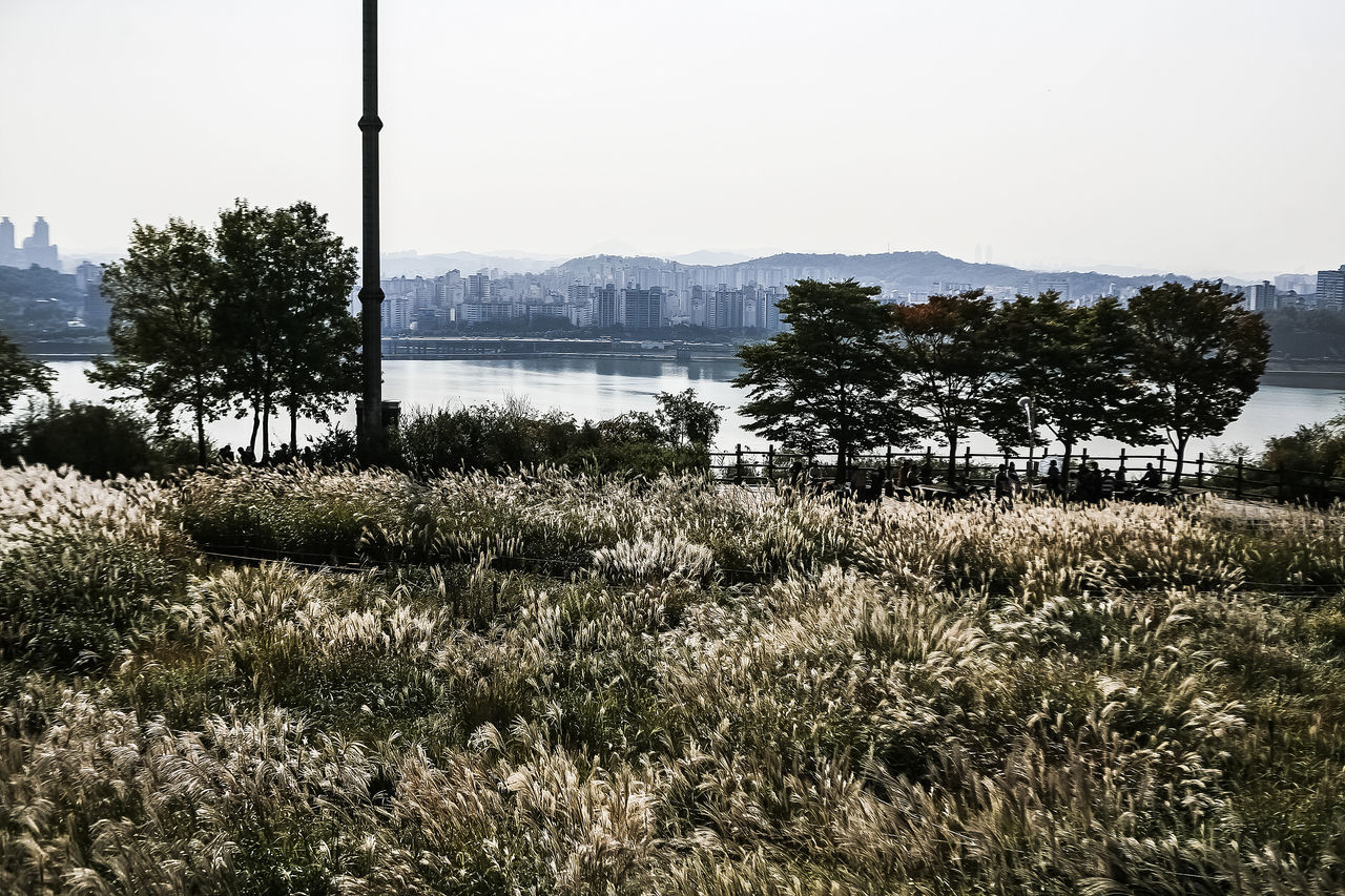 Trees Growing By Han River