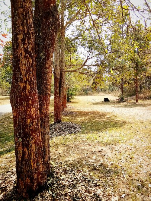 Tree Nature Growth No People Beauty In Nature Outdoors Day Sunlight Tranquil Scene Tree Trunk Tranquility Park Grass Scenics Landscape
