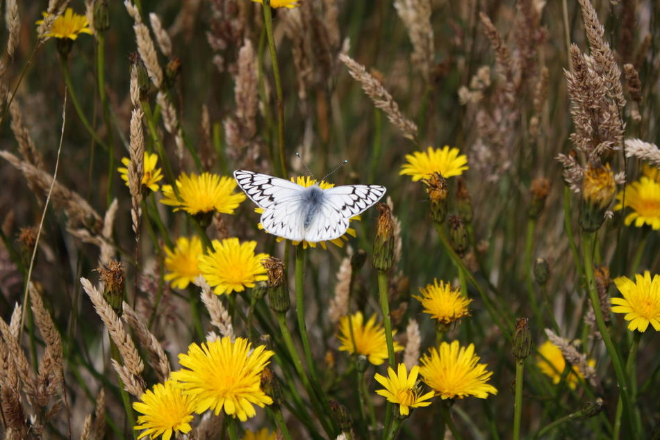 Beautiful stock photos of wings, Animal, Beauty, Beginnings, Butterfly