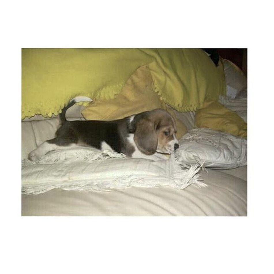 Shaggy 4YearsAgo Beagle 🐶 🐾 😍