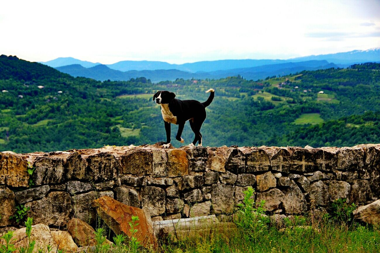 Travel Dog❤ Georgia Old Monastery