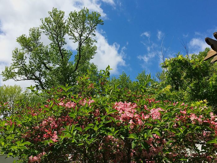 Nature spring trees flowers sky