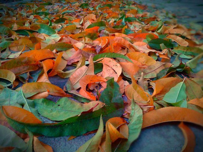 This autumn inside me🍂🍂🍂🍂🍁🍁🍁☔☔☔☔😊😊😊 Enjoying Life