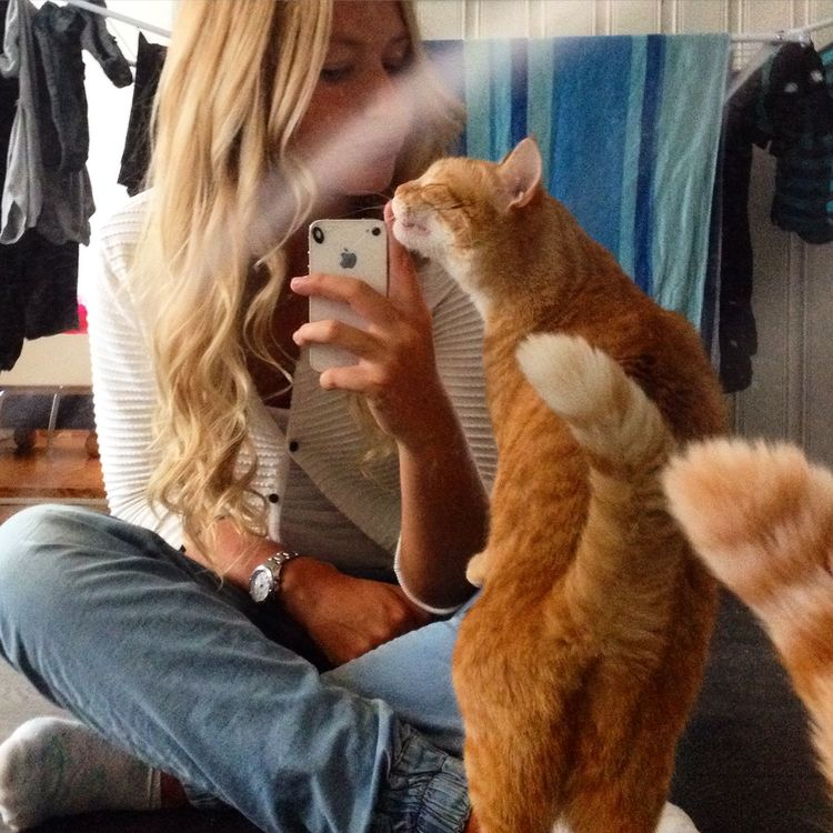 That's Me Home Taking Photos With Tigerlou . Cats Enjoying Life Sarah Check This Out Hi!