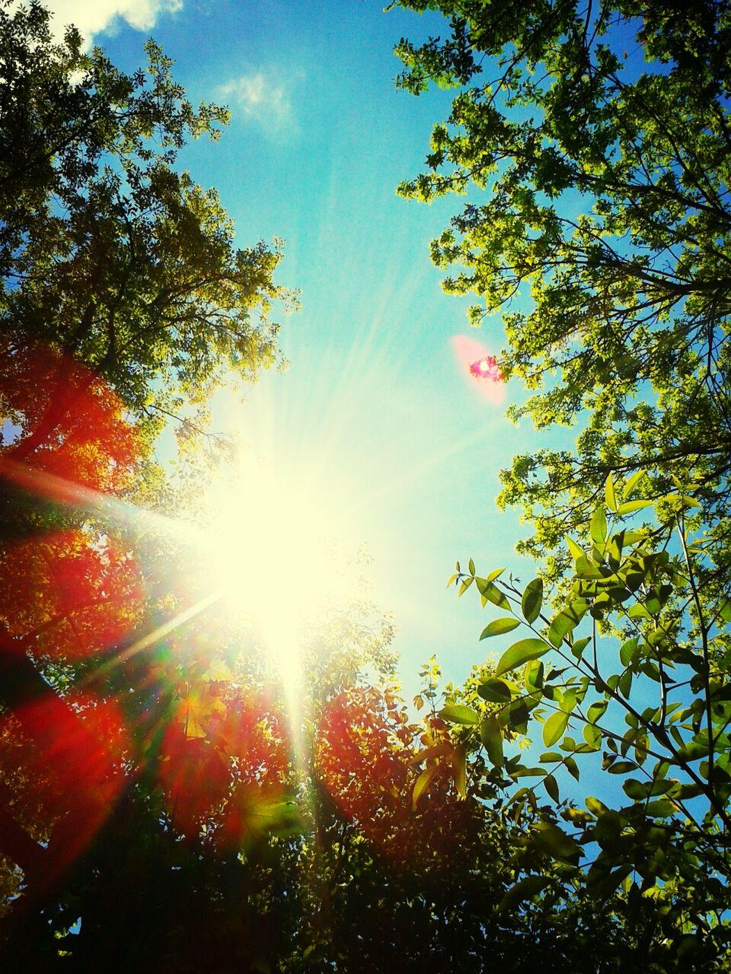 The Power Of Sun Trees Sun In My Face Taking Photos