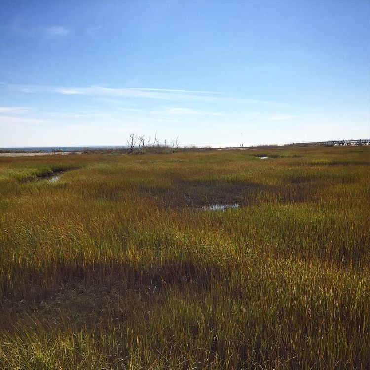 Landscape Tranquil Scene Grass Vegetation Colors Of Nature
