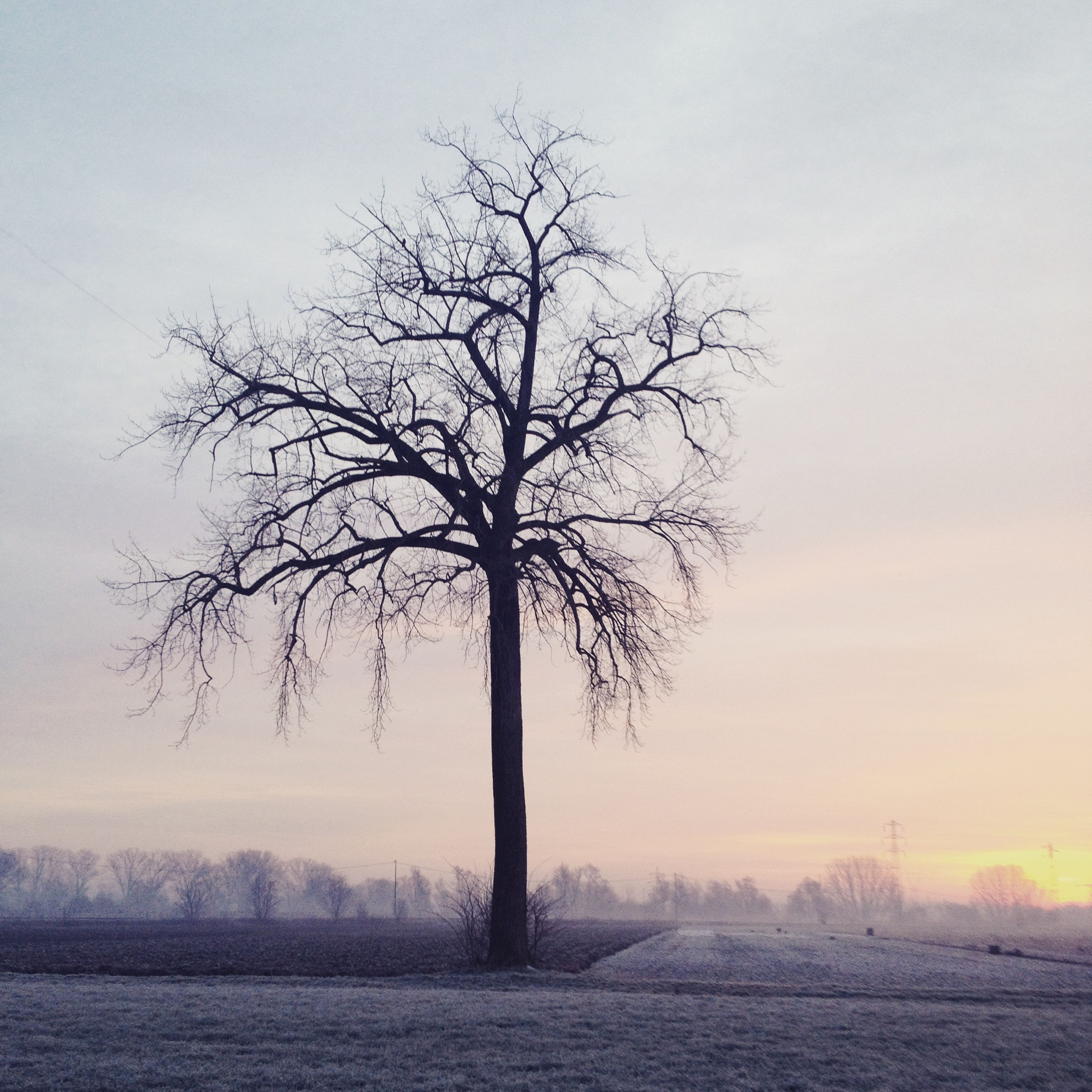 bare tree, winter, tranquility, tranquil scene, tree, cold temperature, snow, scenics, landscape, beauty in nature, nature, weather, field, tree trunk, branch, season, sky, non-urban scene, silhouette, single tree