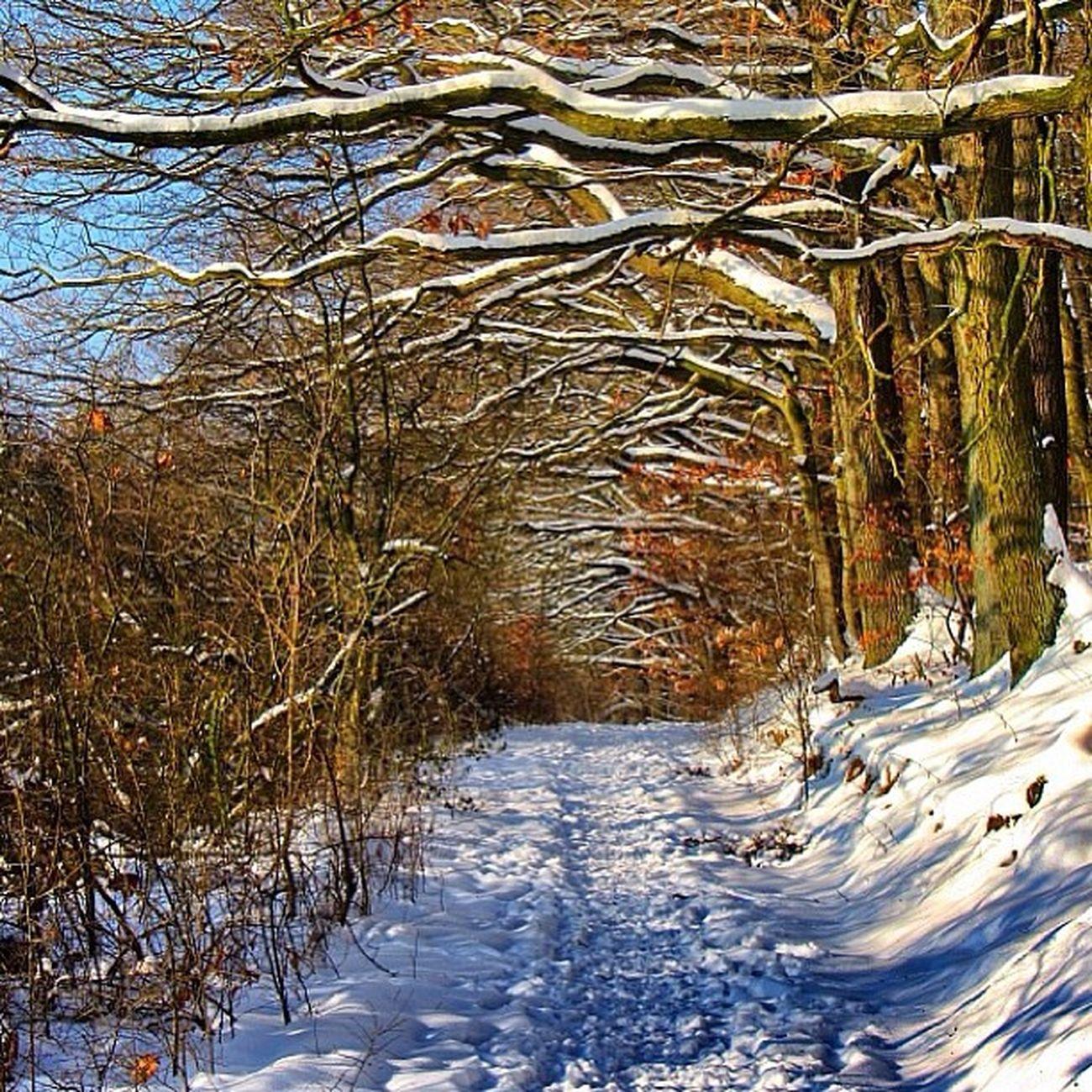 Sklblog Trail Tree Winter Salzdetfurth Laufen Run TrailRun
