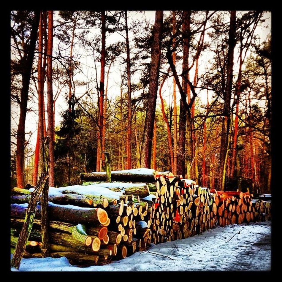 Wood Forest Winter Warsaw poland nature trres sun sunshine