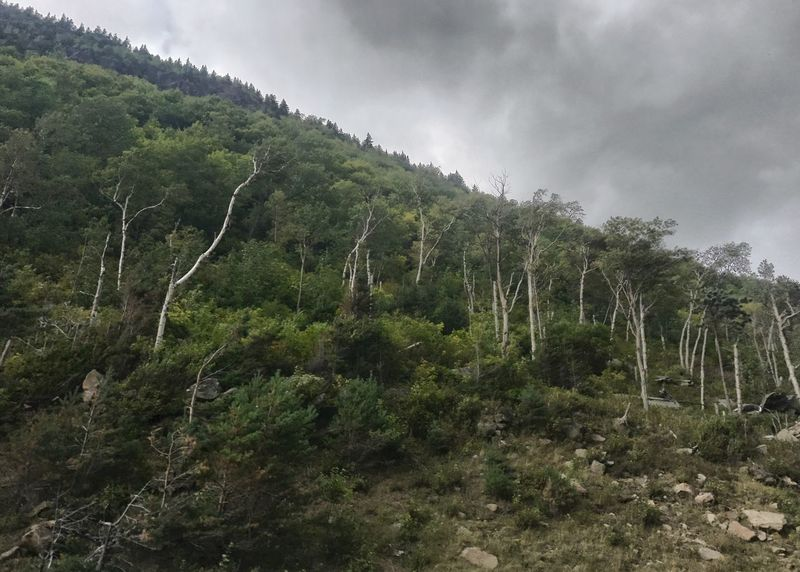 Mountain side scrub brush. Mountain Side Scrub Brush White Bark Slope Gravel Horizontal Cloudy Sky Scenics Tree Landscape Outdoors Mountain Growth Green Color Forest