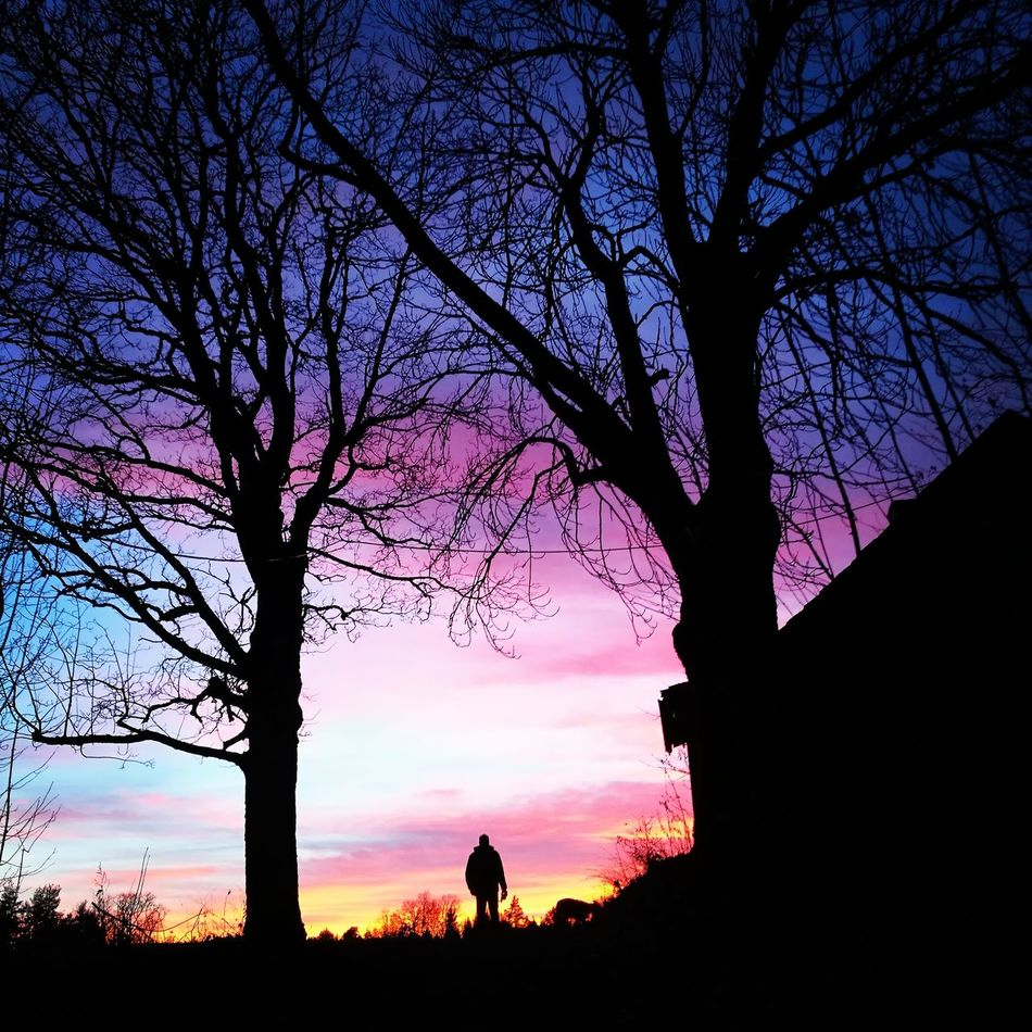Sunset Sky Purple Tree Silhouette Beauty In Nature Nature Dramatic Sky Outdoors Landscape Romantic Sky First Eyeem Photo