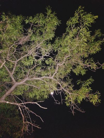 Nigth 🌜⭐️ Moonlight