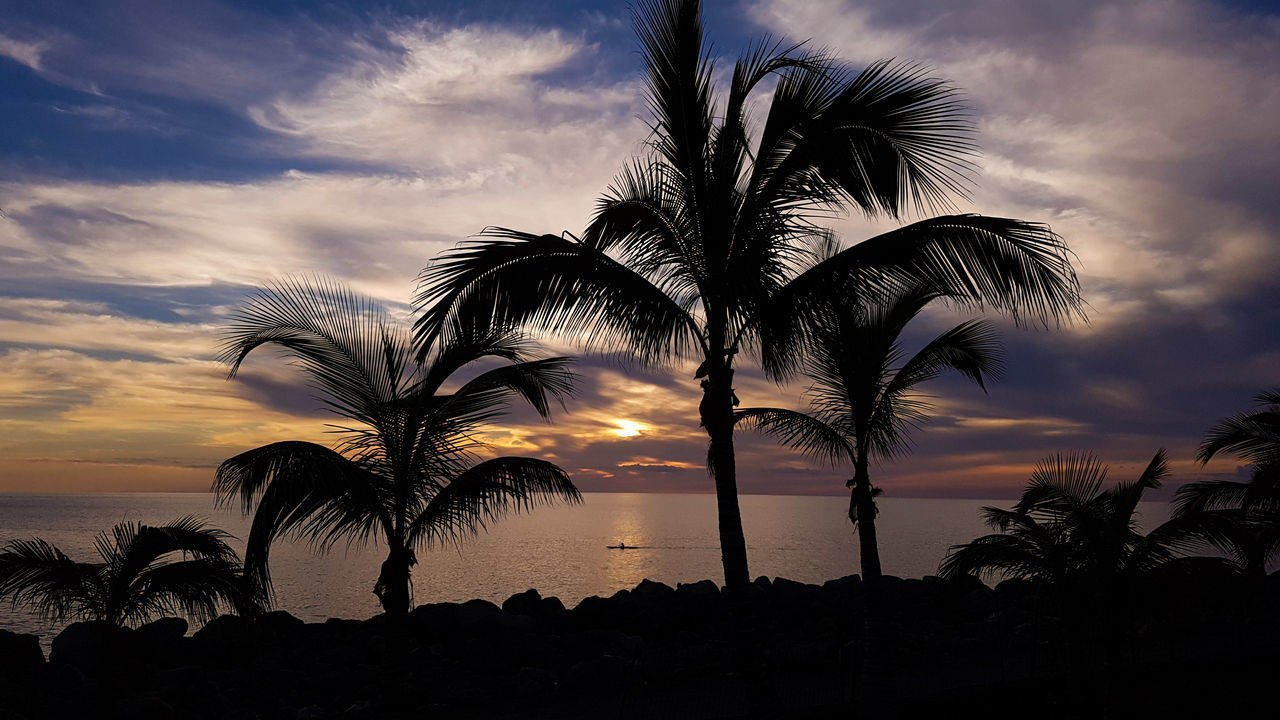 Shadow Shadows & Lights PalmsTrees Sunset Sea Dramatic Sky Nature Palm Tree Sky Sun EyeEm Best Shots Taking Photos Light And Shadow EyeEm Nature Lover Silhouette Nature_collection Palm Tree Cloud - Sky EyeEmBestPics