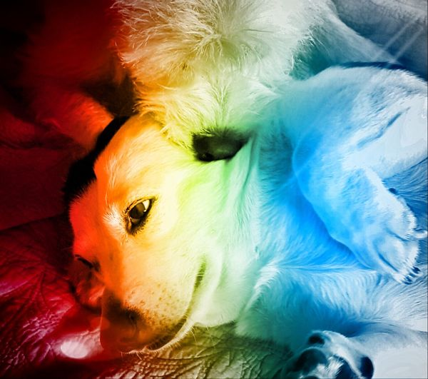 Animal Body Part Animal Hair Animal Head  Close-up Comfortable Cute Dog Dog Love Domestic Animals Gay Dog Lying Down Mammal Nature No People Pets Portrait Queerlove Relaxation Resting Sofa