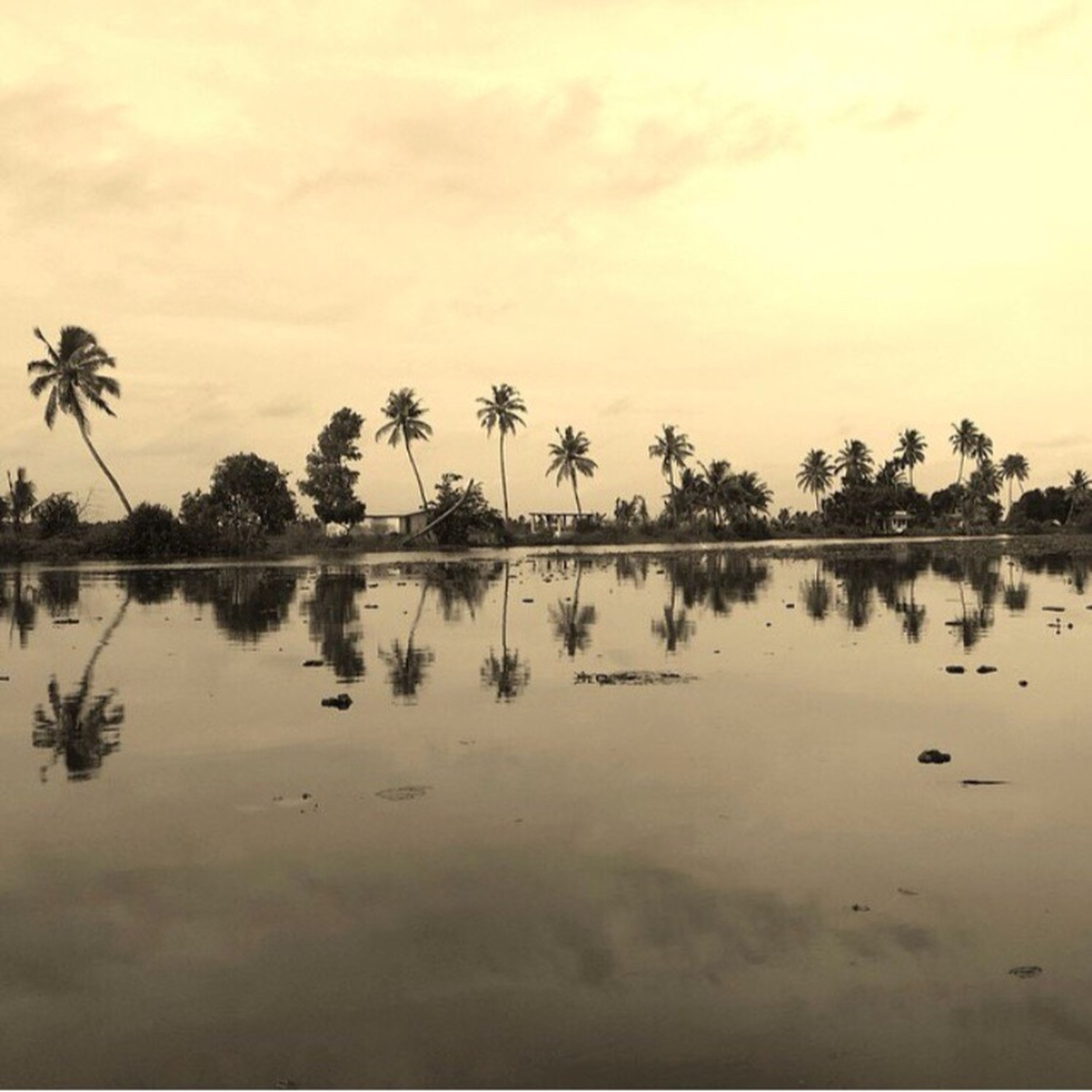 tranquil scene, tranquility, tree, sunset, scenics, sky, beauty in nature, water, reflection, nature, palm tree, silhouette, idyllic, lake, cloud - sky, waterfront, growth, dusk, outdoors, non-urban scene
