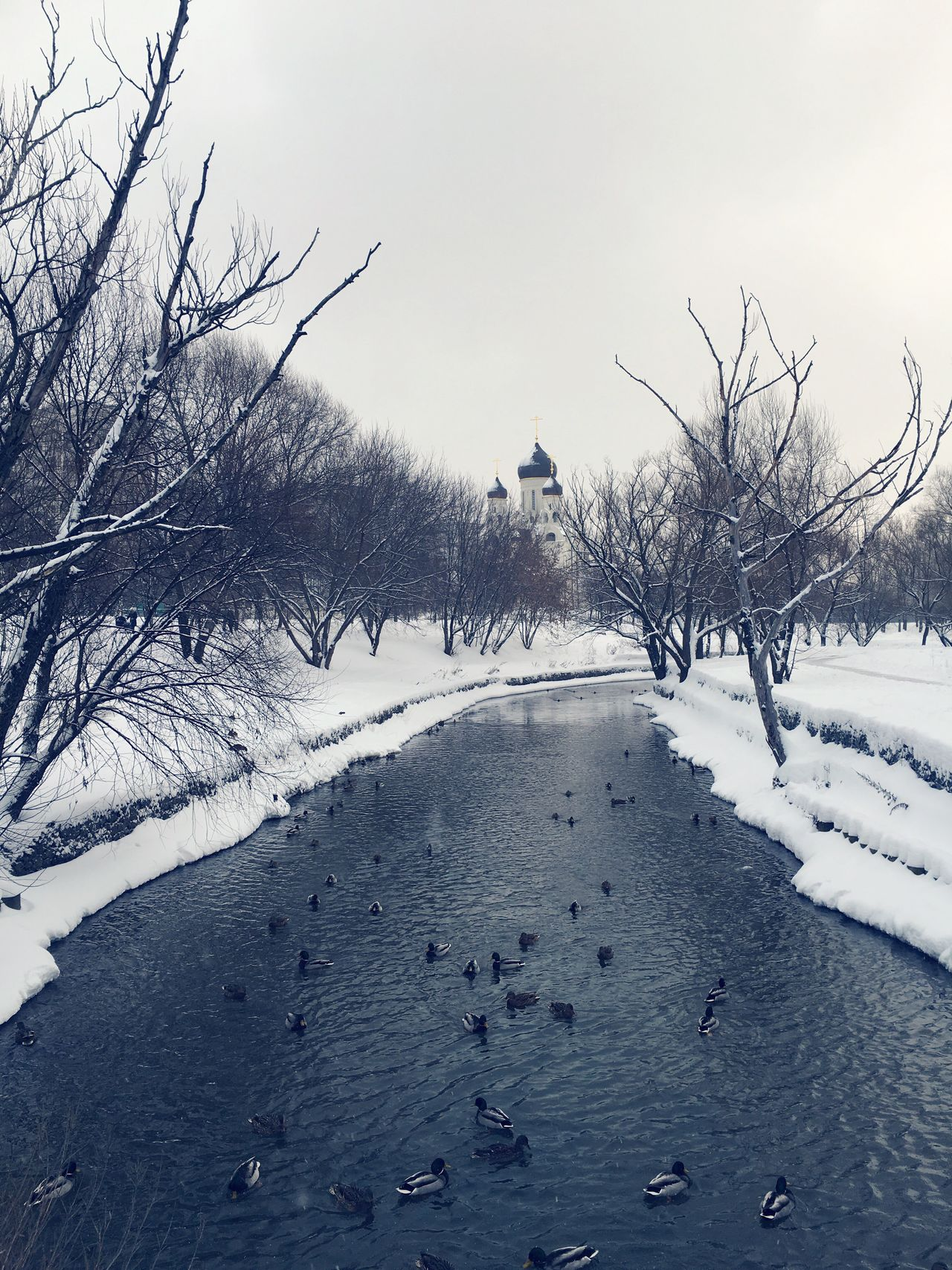 Bare Tree Winter Cold Temperature Snow Tree Nature Weather Outdoors Branch No People Day Tranquility Sky Beauty In Nature Parks Moscow Russia 🇷🇺