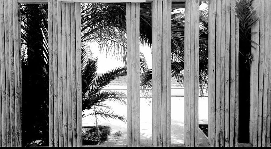 Low Angle View Tall - High Tall Growth Outdoors Day Full Frame Palm Leaf Modern Frond Skyscraper Green Tranquility Seeing The Beauty In Life Sea Beauty In Nature Beauty Is In The Eye Of The Beholder What Does Peace Look Like To You? What Eye See
