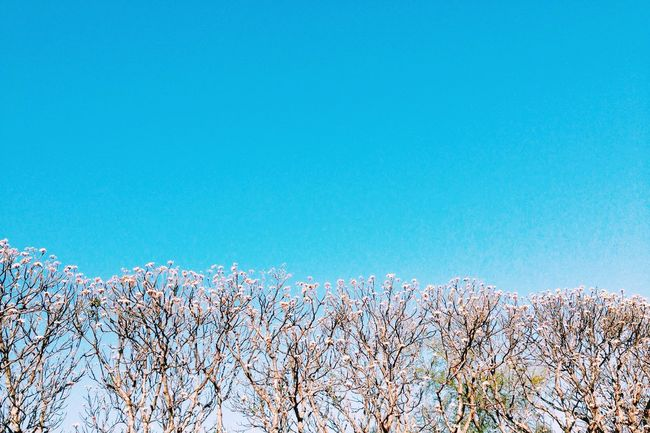 The Great Outdoors - 2016 EyeEm Awards Sri Chang Island Thailand Flower Tree Blue Sky