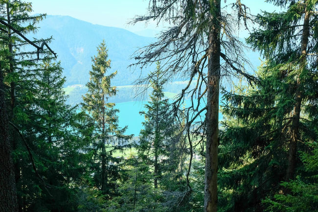 Austrianphotographers Beautiful Beautiful Nature EyeEm Best Shots EyeEm Nature Lover Forest Forrest Forrest Photography Fuschlsee Hiking Idyllic Lake Lake View Mountain Nature Nature Nature Photography Nature_collection Outdoors SalzburgerLand Silence Tree View From Above Wood