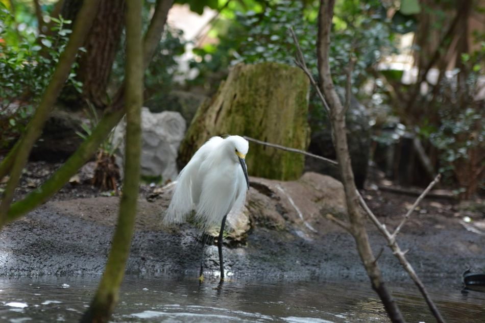 Animal Themes Animals In The Wild Bird One Animal Animal Wildlife Nature Egret Day No People Outdoors Great Egret Tree Heron Water Beauty In Nature Perching Gray Heron White Long Beak