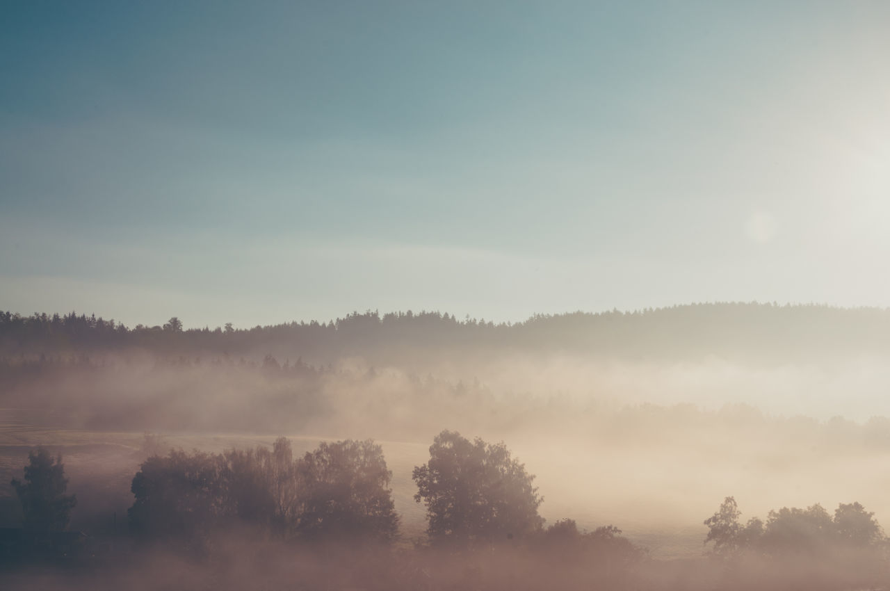 nature, beauty in nature, tranquility, tree, tranquil scene, scenics, no people, idyllic, landscape, fog, outdoors, sky, growth, hazy, day