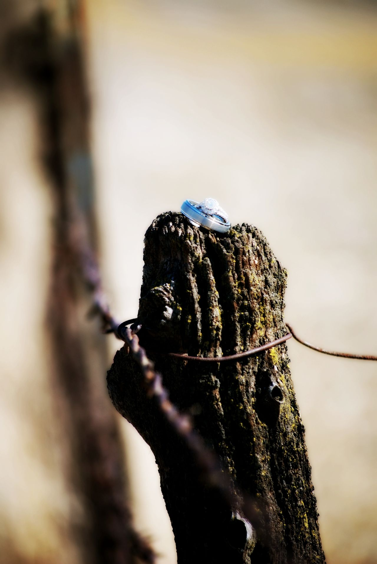 Barbed Wire Close-up Day Diamond Rings No People Old Fence Post Outdoors Selective Focus Sunny