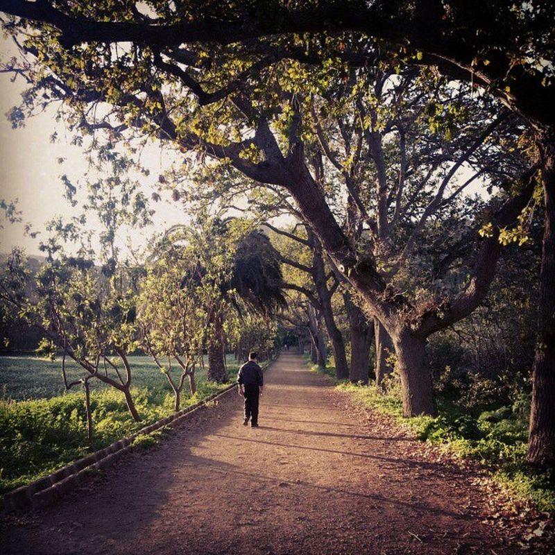 Pues no, no me ha hecho falta ir a la campiña inglesa para tomar esta foto, que corresponde a la Finca de Osorio, en Teror. Teror GranCanaria Osório  FincaDeOsorio Way Camino Road Forest Bosque Laurisilva Árbol Tree Country Campo