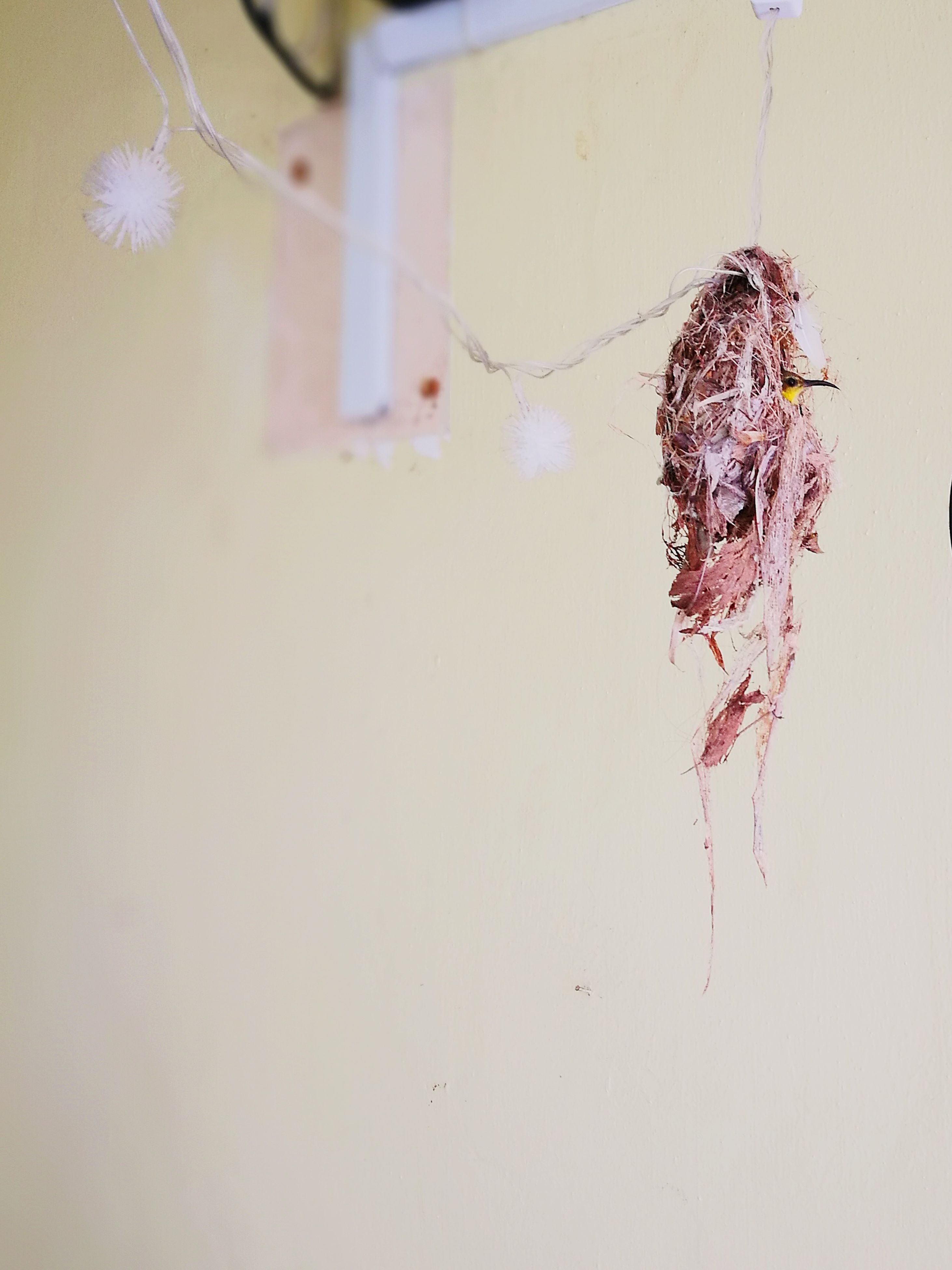 insect, animal themes, one animal, no people, destruction, close-up, indoors, day