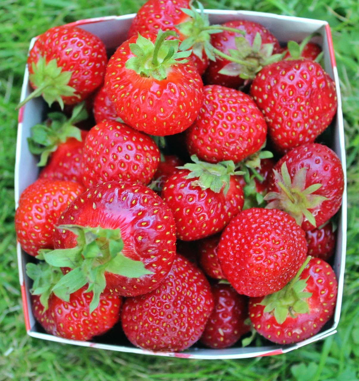 strawberry, fruit, red, freshness, food and drink, food, berry fruit, close-up, healthy eating, no people, ripe, sweet food, indoors, leaf, day, ready-to-eat