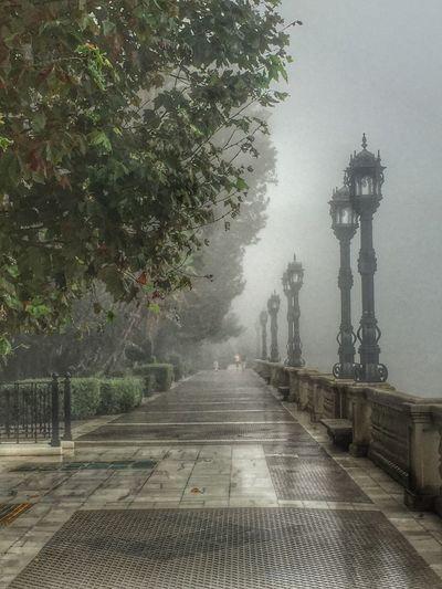 Amanecer con niebla Franciscojpg