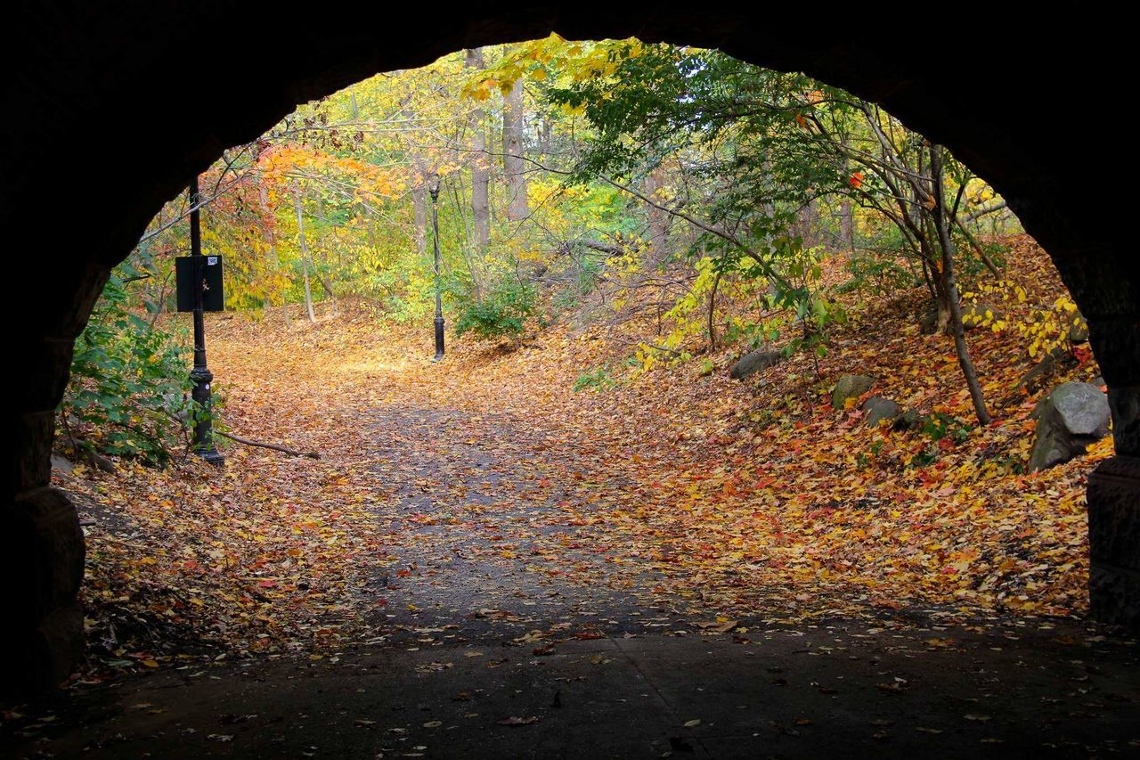 Foliage Tunnel Fall Leaves Foliage Nature Park Natural Colors Outdoors New York Brooklyn Prospect Park City Nature Fall Colors Framing