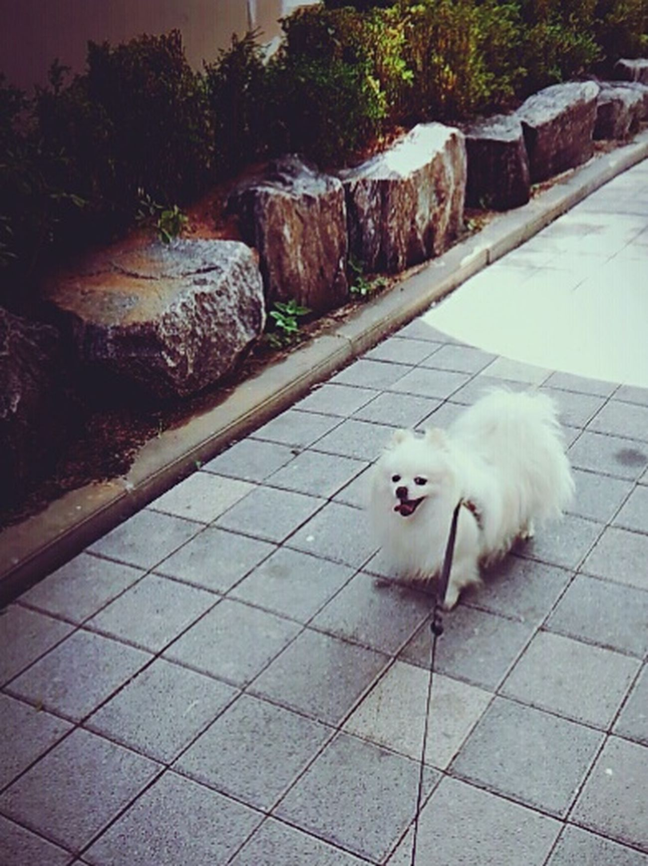 2015.05.30 쁘띠랑 : ) First Eyeem Photo Petti♥ 쁘띠