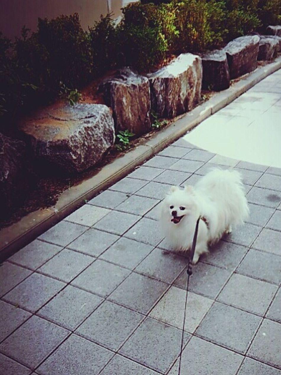 2015.05.30 쁘띠랑 : ) First Eyeem Photo Petti♥ 쁘띠