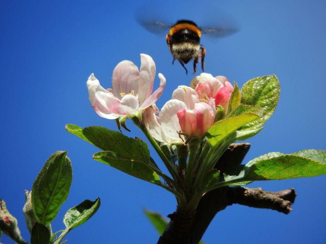Landing. Sardinia Oldpicture EloediLo Tadaa Community Cagliari Flying EyeEm Nature Lover Cagliari Urban City Bee Flowers