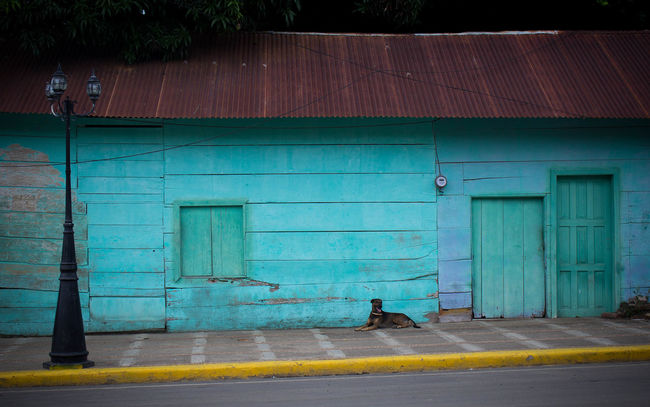 Scenes from San Juan del Sur, Nicaragua. Central America Abandon House Animal Architecture Blue House Building Exterior Built Structure Centro America City Closed Day Dog Empty House Exterior Green Windows Nicaragua Outdoors San Juan Del Sur , Nicaragua Street Street Animals Town Tranquility