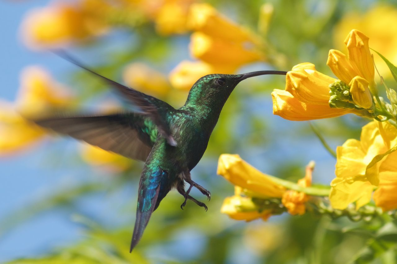 Animal Themes Animal Wildlife Animals In The Wild Beauty In Nature Best EyeEm Shot Bird Bird Photography Close-up Day Flower Focus On Foreground Freshness Hummingbird Nature Nature Photography No People One Animal Outdoors Spread Wings