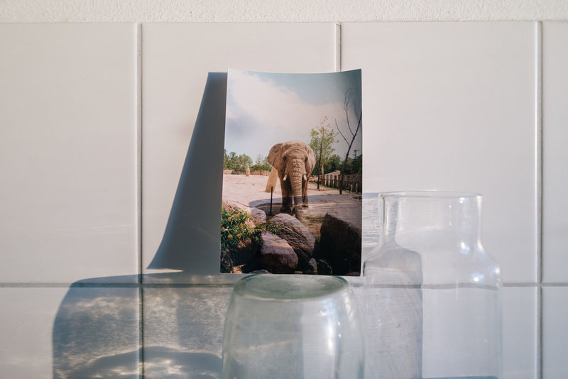 The elephant in the room... African Elephant Awareness Carafe Color Drinking Water Elephant Elephant In The Room Intothewild Kitchen Kitchen Life Kitchen Stories Kitchen Tiles Light And Shadow Please Potable Water Save The Nature Save The Planet Save The World Save Water Savetheplanet Splash Tap Water Tiles Water Water Carafe EyeEmNewHere
