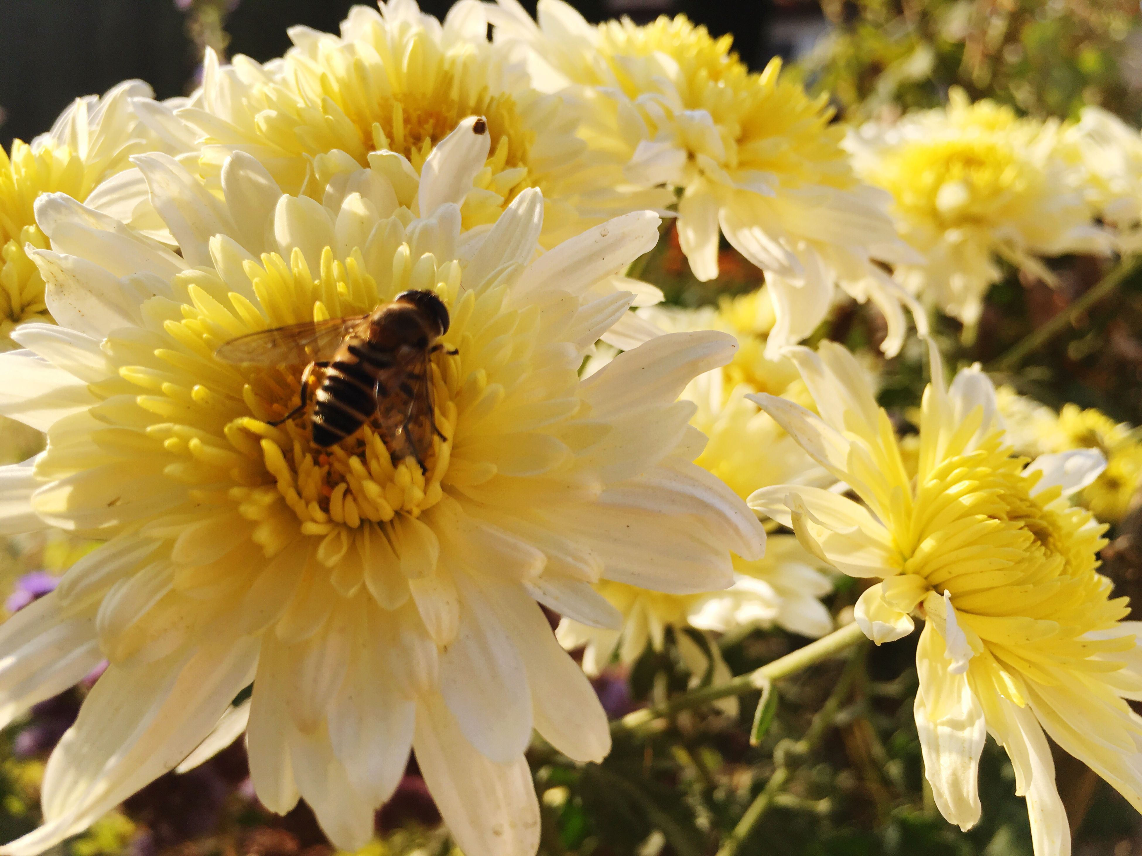 flower, petal, beauty in nature, fragility, flower head, nature, animal themes, one animal, growth, insect, freshness, animals in the wild, yellow, close-up, pollen, plant, blooming, outdoors, no people, day, pollination