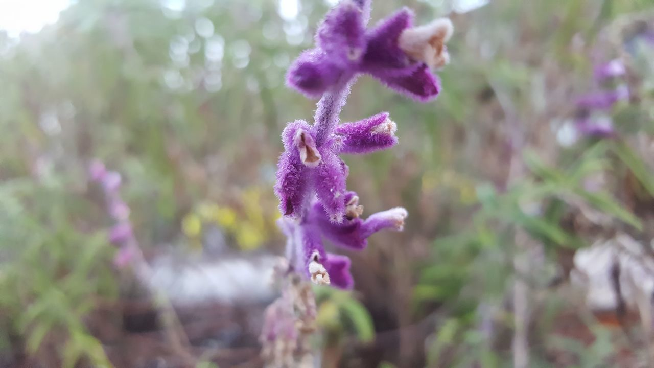 Death brings life.. Purple Plant Flower Outdoors Nature Orchid Growth Close-up No People Beauty In Nature Day