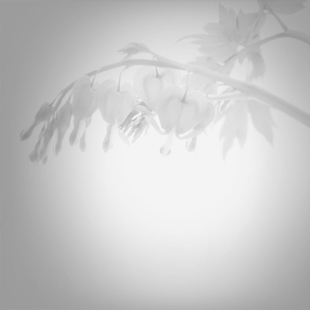 Flowers Blackandwhite Spring Flowers White Album