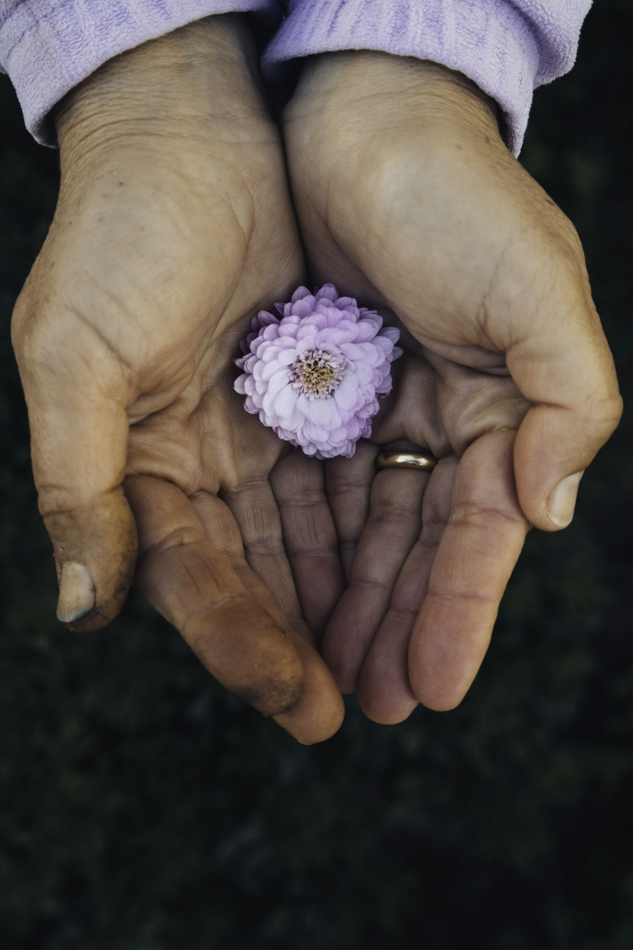 Adult Adults Only Beauty In Nature Close-up Day Flower Flower Head Fragility Freshness Green Color Holding Human Body Part Human Hand Nature One Person Outdoors People Working Hands Working Woman