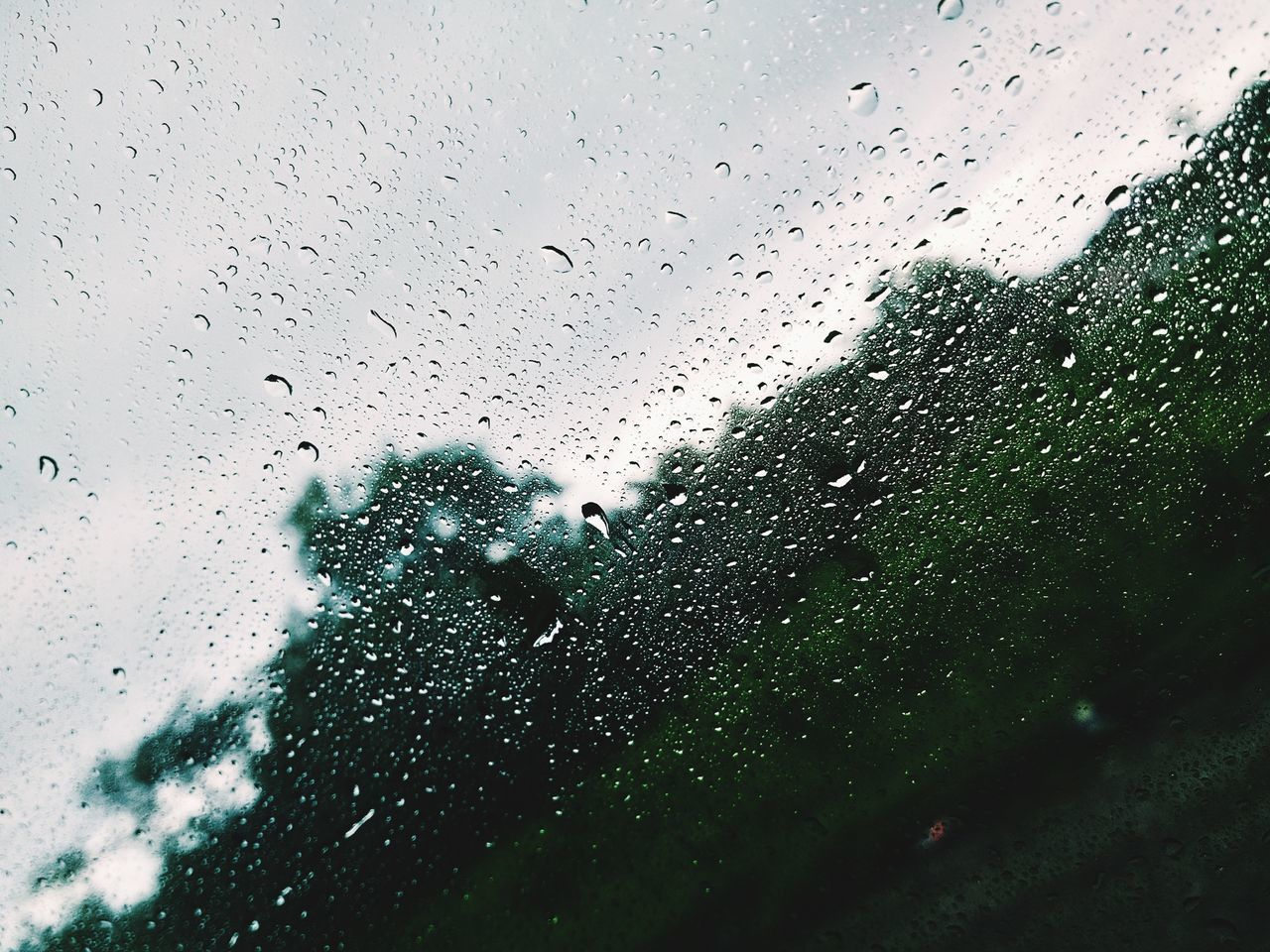 drop, glass - material, window, wet, water, glass, rainy season, weather, raindrop, indoors, no people, sky, looking through window, day, nature, animal themes, close-up, mammal