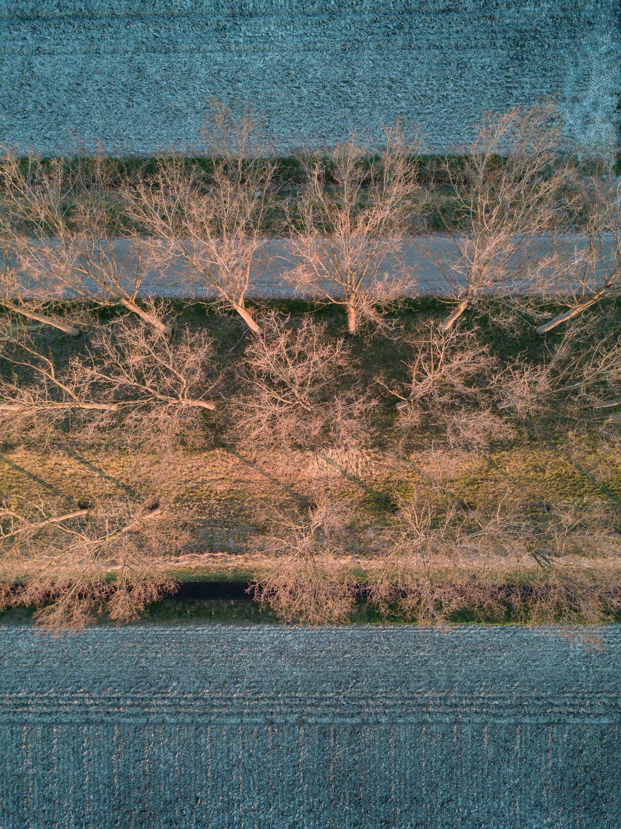 Trees in the countryside Abstract Beauty In Nature Copy Space Countryside Day Dike Drone  Farmland From Above  Lines Nature Netherlands No People Outdoors Scenics Sunset Tranquility Trees Water Winter Zeeland  Zeeuws Vlaanderen Flying High Abstract Photography EyeEm Best Shots
