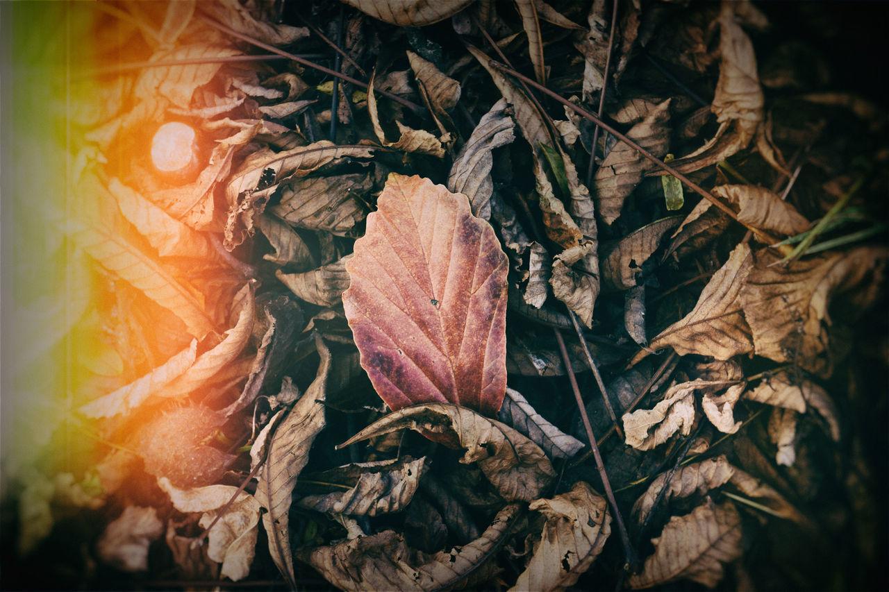 Analogous Colors Analogue Photography Autumn Autumn Colors Autumn Leaves Beauty In Nature Brown Color Palette Colorful Colors Garden Green Leafs Photography Lightroom Nik Collection Nostalgia Nostalgic  Nostalgic Landscape Retro Retro Filters Retro Styled Solstice Sunset Tivoli VSCO