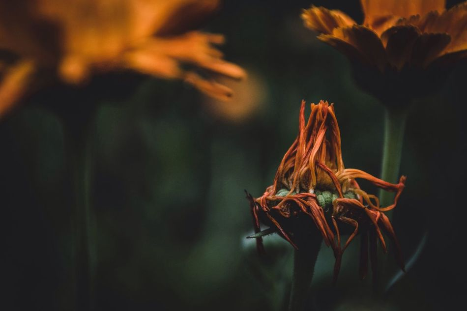 Beautiful stock photos of japan, Beauty In Nature, Close-Up, Day, Dried Plant