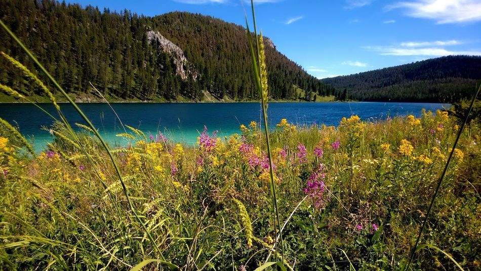 Montana Cliff Lake Cliff Point Campground Lake Scenic Flowers Nature Outdoors Campground Colorful