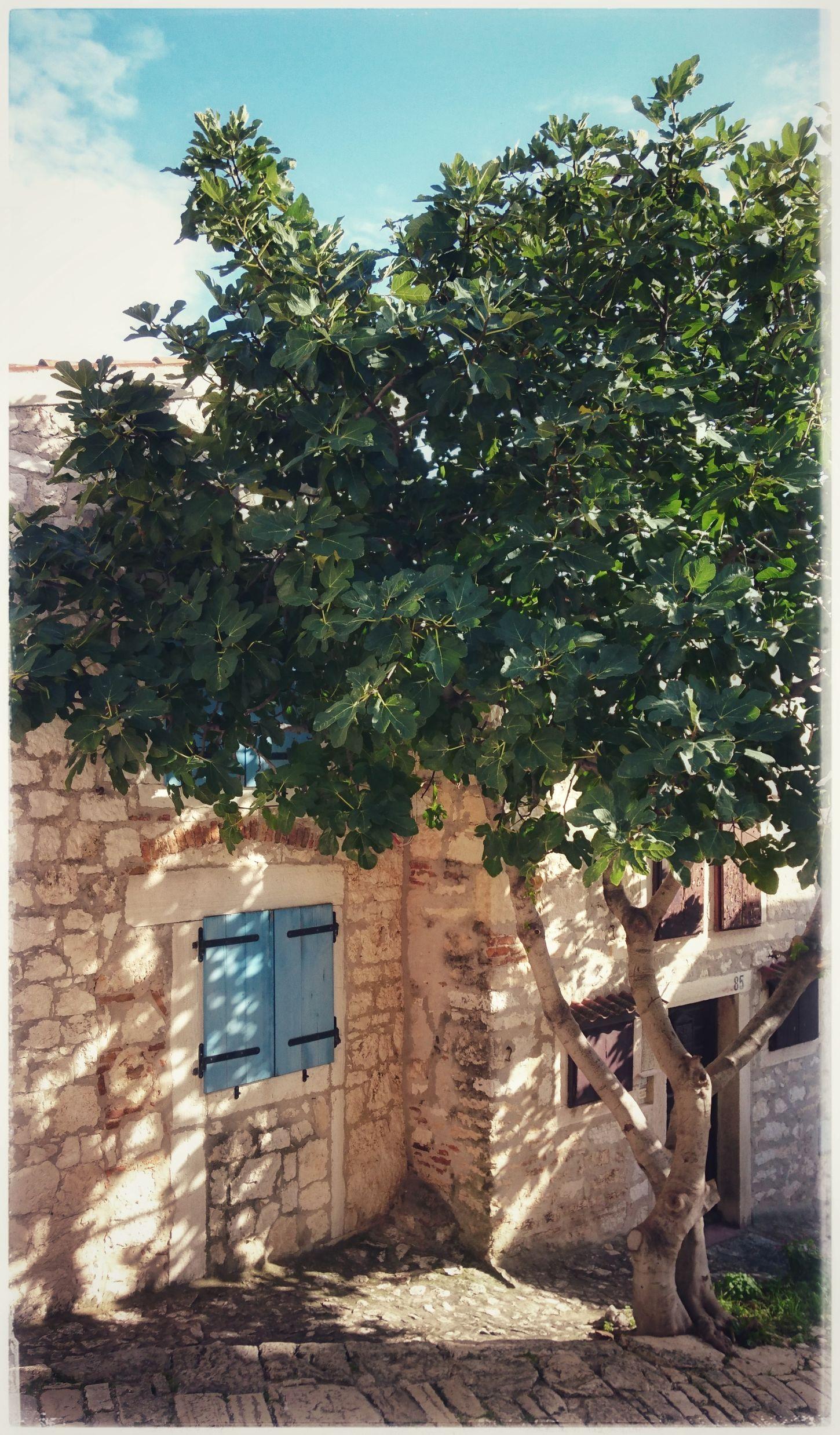 Undermytree Cityview Rovinj Croatia Sunlight Sunshineaddicted Sunshine Collection Croatiafullofmagic