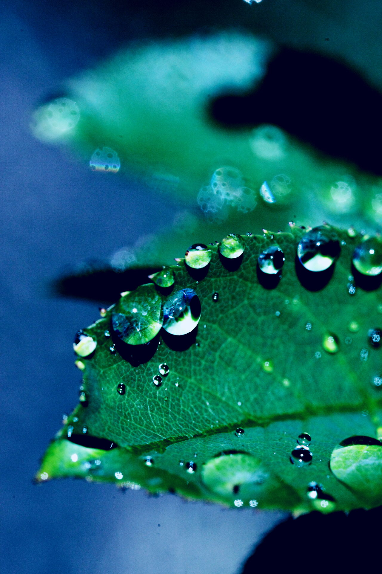 Beauty In Nature Close-up Day Drop Freshness Green Color Leaf Nature No People Outdoors RainDrop Water Wet