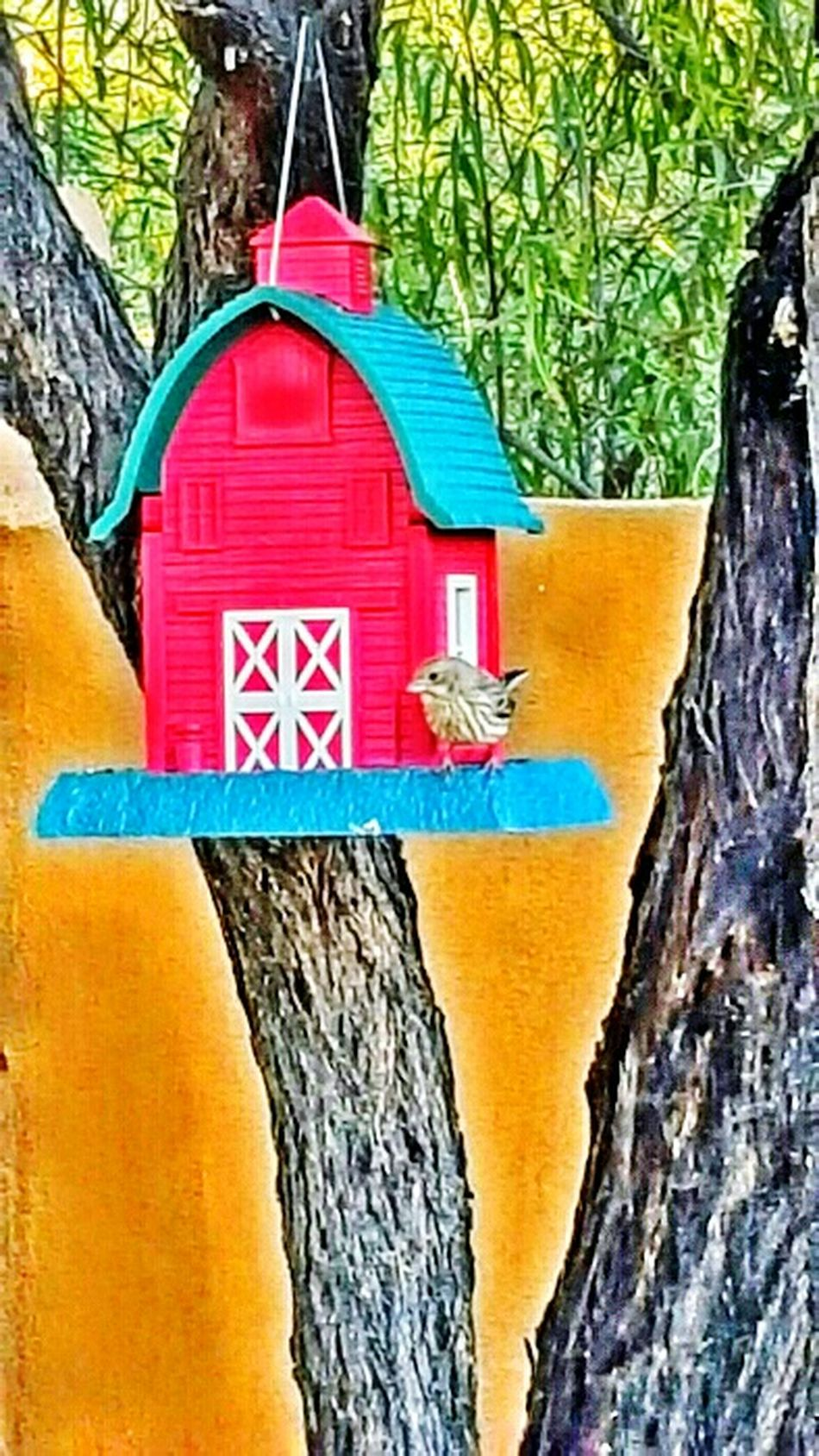 Hello World Moments Of Life Bird Photography Feeding The Birds Enjoying Life Aboveandbeyond Tree Branches Trees Collection Animallovers Nature_perfection Back Home Lotsoffun Birdwatching EyeEm Nature Lover Eyeemspring Sitting Outside Looking At Trees. Arizonawren