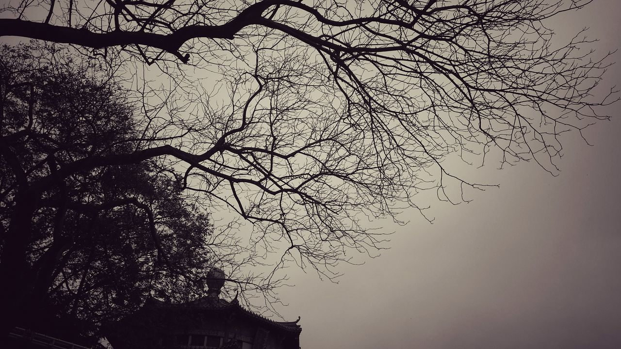 Tree Sky Low Angle View Nature No People Branch Bare Tree Outdoors Beauty In Nature My Point Of View Tranquility EyeEm Best Shots Artistic Expression EyeEm Gallery EyeEm Best Shots - Nature Masterclass Original Experiences Getting Inspired My Unique Style Architecture_bw landscape Cold Temperature